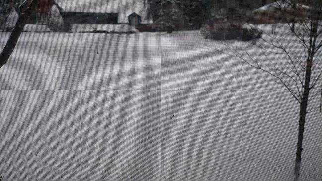 biggest snow fri