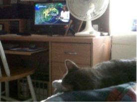 casey watching carol erickson